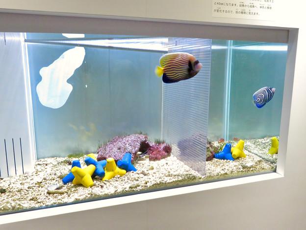 名古屋港水族館「カラフルコレクション ~絢爛華麗な水の生き物たち」展 - 27