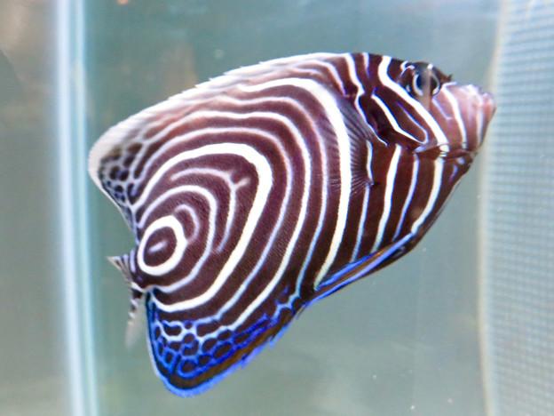 名古屋港水族館「カラフルコレクション ~絢爛華麗な水の生き物たち」展 - 28
