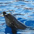 名古屋港水族館:シャッタースピード早くして撮ったイルカショー - 1