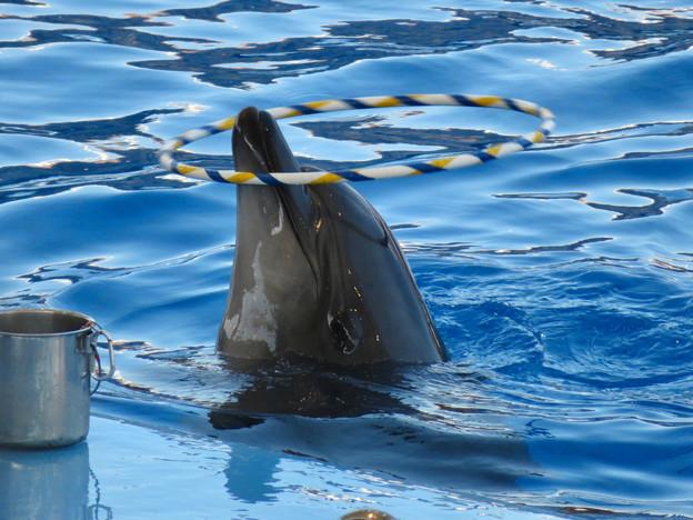 名古屋港水族館:シャッタースピード早くして撮ったイルカショー - 2