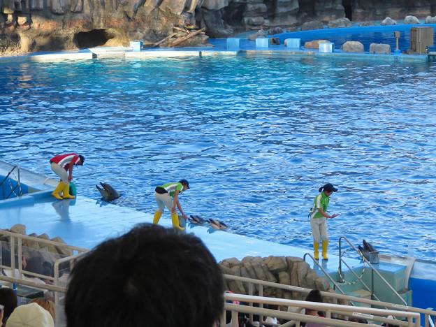 名古屋港水族館:シャッタースピード早くして撮ったイルカショー - 3