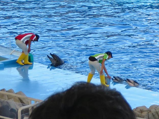 名古屋港水族館:シャッタースピード早くして撮ったイルカショー - 4
