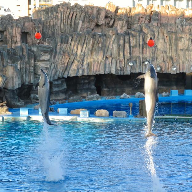 名古屋港水族館:シャッタースピード早くして撮ったイルカショー - 6