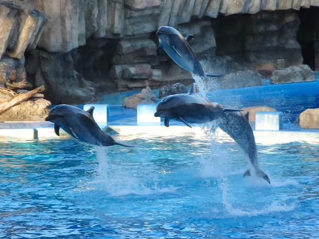 名古屋港水族館:シャッタースピード早くして撮ったイルカショー - 7