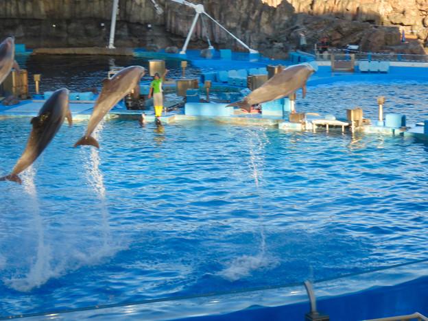 名古屋港水族館:シャッタースピード早くして撮ったイルカショー - 8