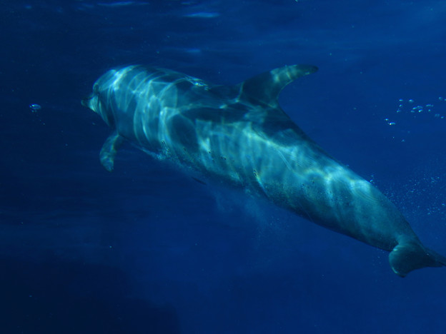 名古屋港水族館:泳ぐイルカの周りにある空気の粒 - 3