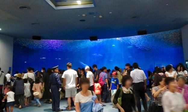 名古屋港水族館:イワシトルネード - 1