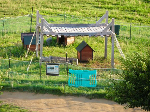 名古屋港水族館:ペンギンよちよちウォーク用?のケーブペンギンの家 - 2