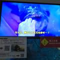 Photos: 名古屋港水族館:歯磨きしてもらうクエの映像 - 1
