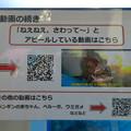 Photos: 名古屋港水族館:歯磨きしてもらうクエの映像 - 2
