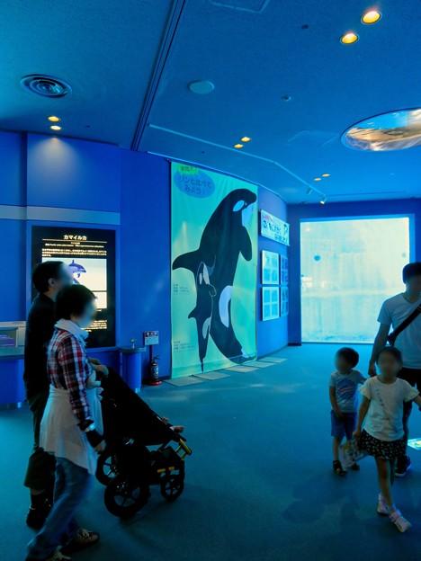 名古屋港水族館:等身大の?シャチのイラスト - 1