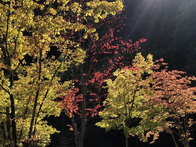 奥多摩の紅葉