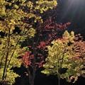 写真: 奥多摩の紅葉