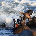 写真: 大波来て