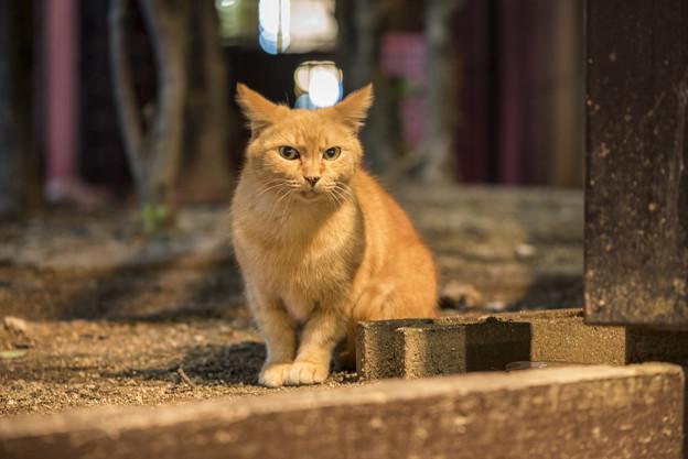 警固の茶猫