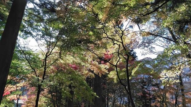 「妙雲寺」の紅葉