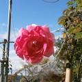 Photos: Sunny Rose