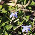 写真: 名前の分からない小花