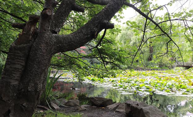 旧道庁の庭園?