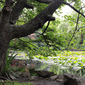 写真: 旧道庁の庭園?