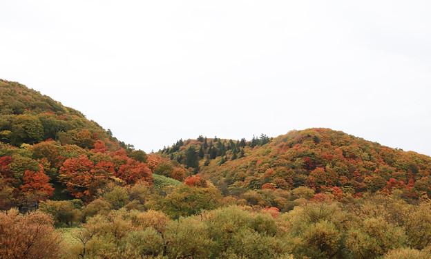 秋も深まり・・?