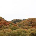 秋も深まり・・②