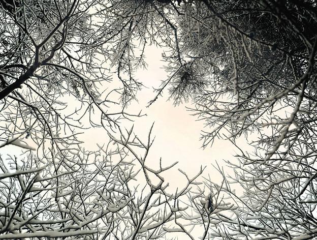 木々に積もるぼた雪(そのまんま)