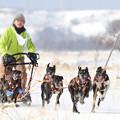 Photos: 6頭引き5kmレース