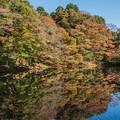 写真: 近場の秋
