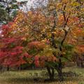 写真: 秋の木コラボ