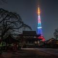 写真: 東京タワー・オリンピックカラー