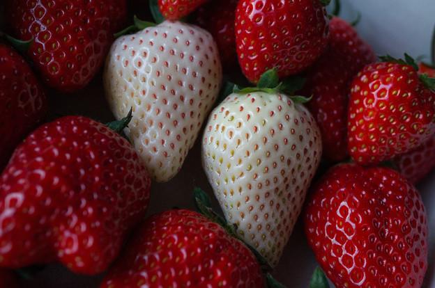 写真: 白イチゴ