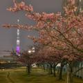 写真: スカイツリー 桜特別ライトアップ 「舞」