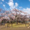写真: 桜の季節 1