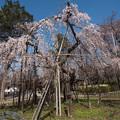 桜の季節 2
