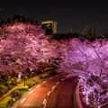 写真: 桜ライトアップ 2