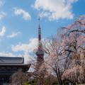 Photos: 東京タワーとしだれ桜