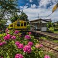 Photos: ローカル列車と紫陽花