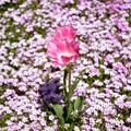 花の中の花