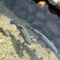 Photos: 魚三匹