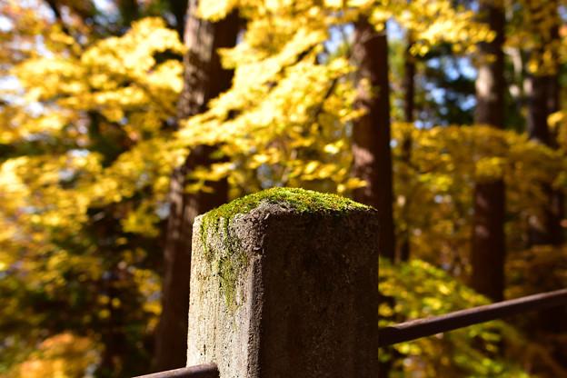 Photos: 緑と黄色