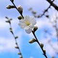 白い花一つ