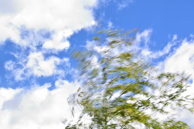 風 笹揺れる