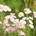 Photos: 花たち
