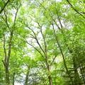 Photos: 木に囲まれて