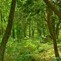 Photos: 緑の場所