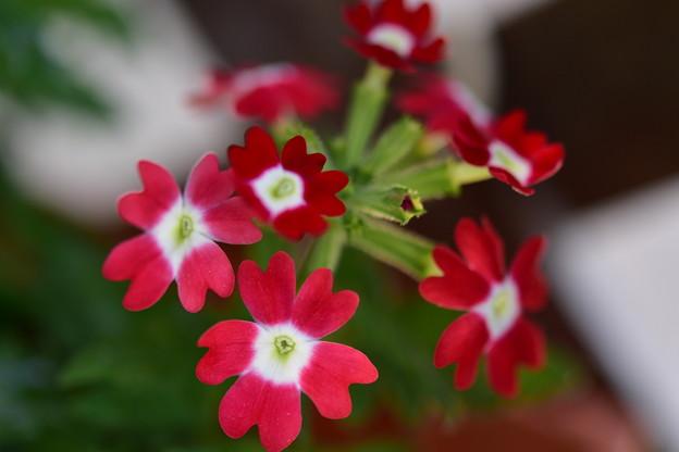Photos: 赤い花たち