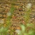 水辺の植物