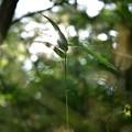 光当たる葉