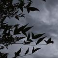 葉と曇り空